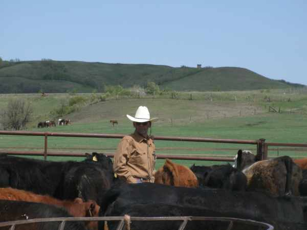Ranch Manager making decisions